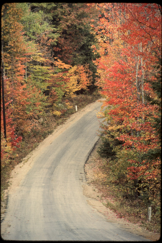 Autumn, Fall, leaves changing, country road